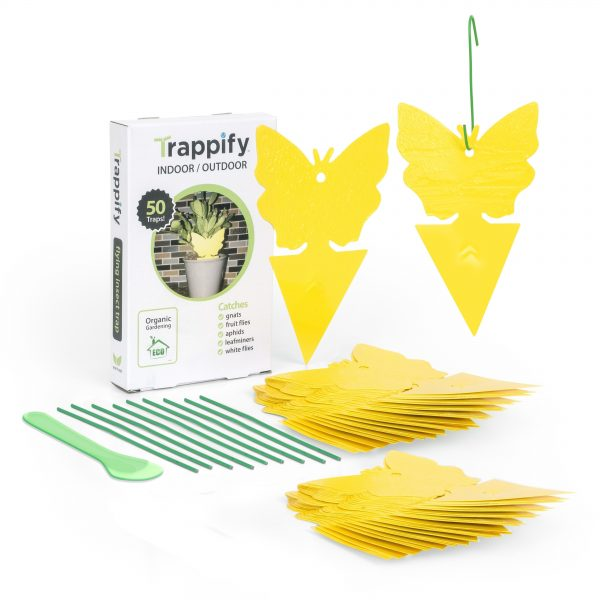 Yellow Dual-Sided Sticky Fruit Fly and Gnat Traps - 50 pack