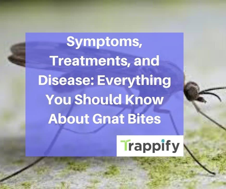 gnat-bites