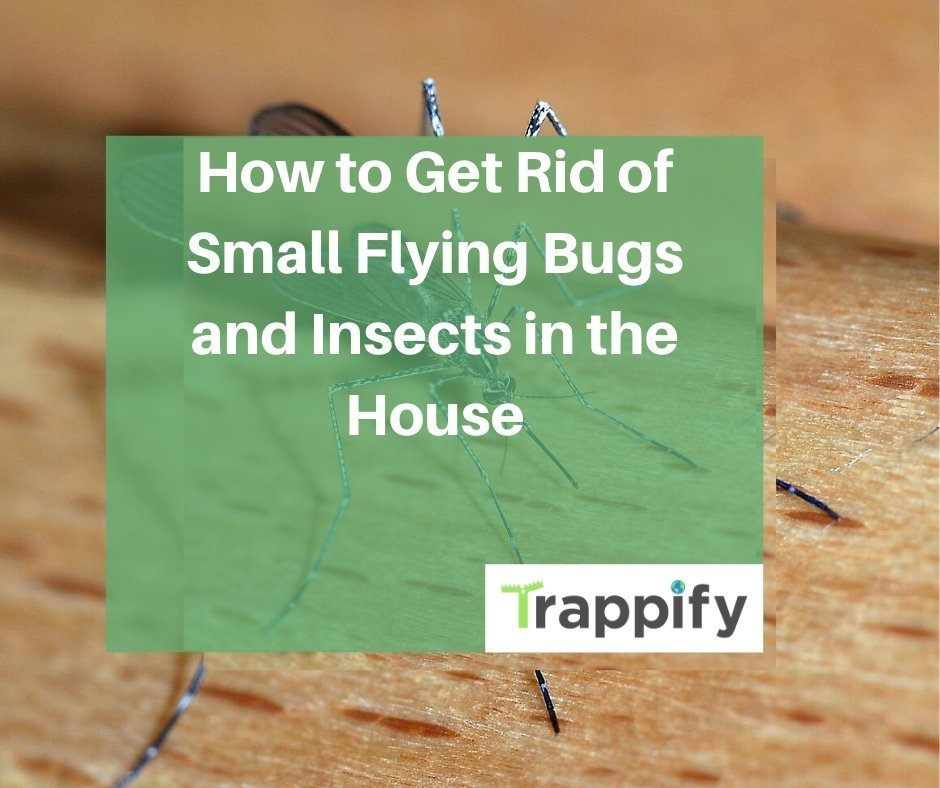 small-flying-bugs