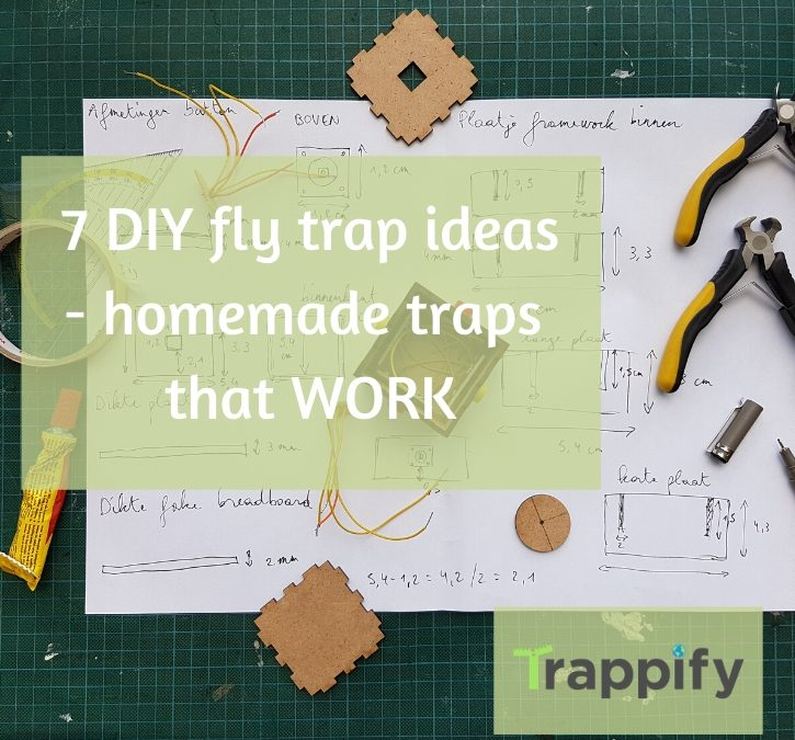 7 DIY fly trap ideas – homemade traps that work