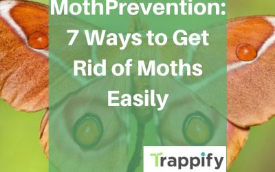 Moth Prevention: 7 Ways to Get Rid of Moths Easily
