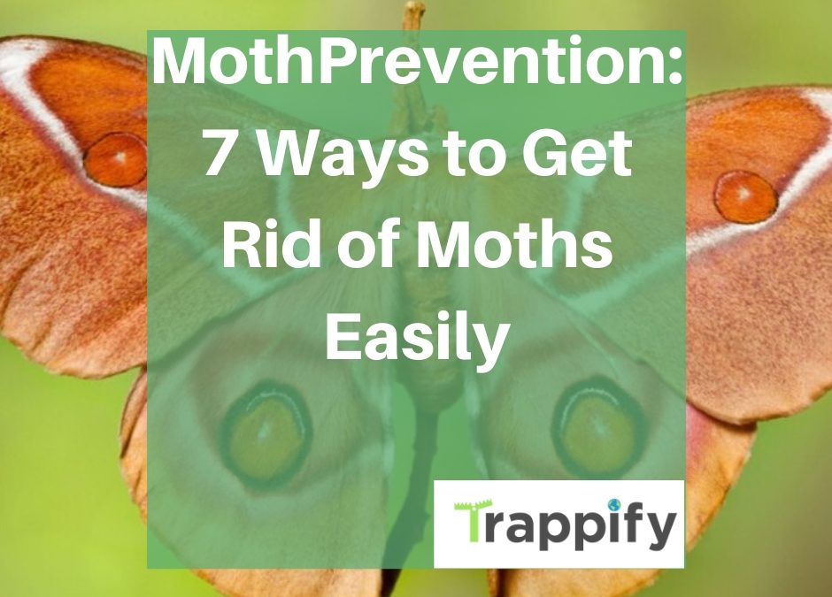Moth-prevention