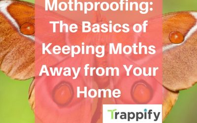 Mothproofing: The Basics of Keeping Moths Away from Your Home