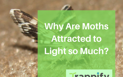 Why Are Moths Attracted to Light so Much?