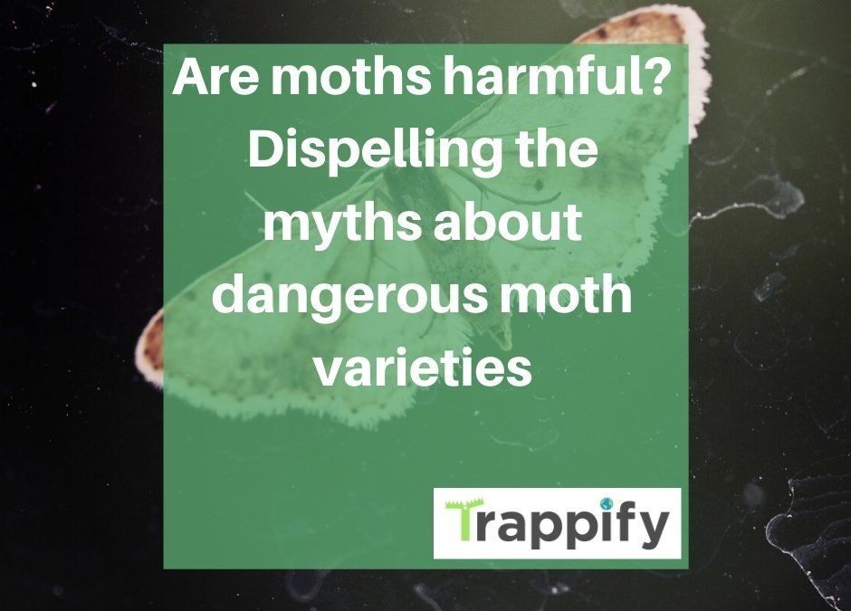 Are moths harmful? Dispelling the myths about dangerous moth varieties
