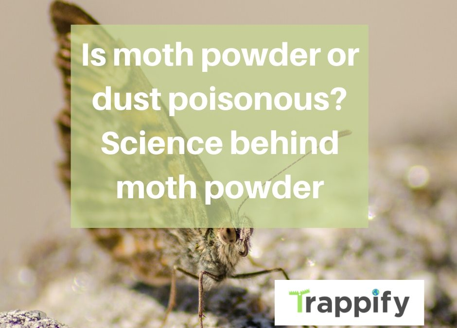 Is moth powder or dust poisonous? Science behind moth powder