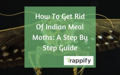 How to Get Rid Of Indian Meal Moths: Step By Step Guide