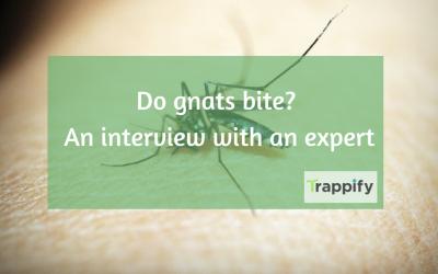 Do Gnats Bite?  An Interview With An Expert