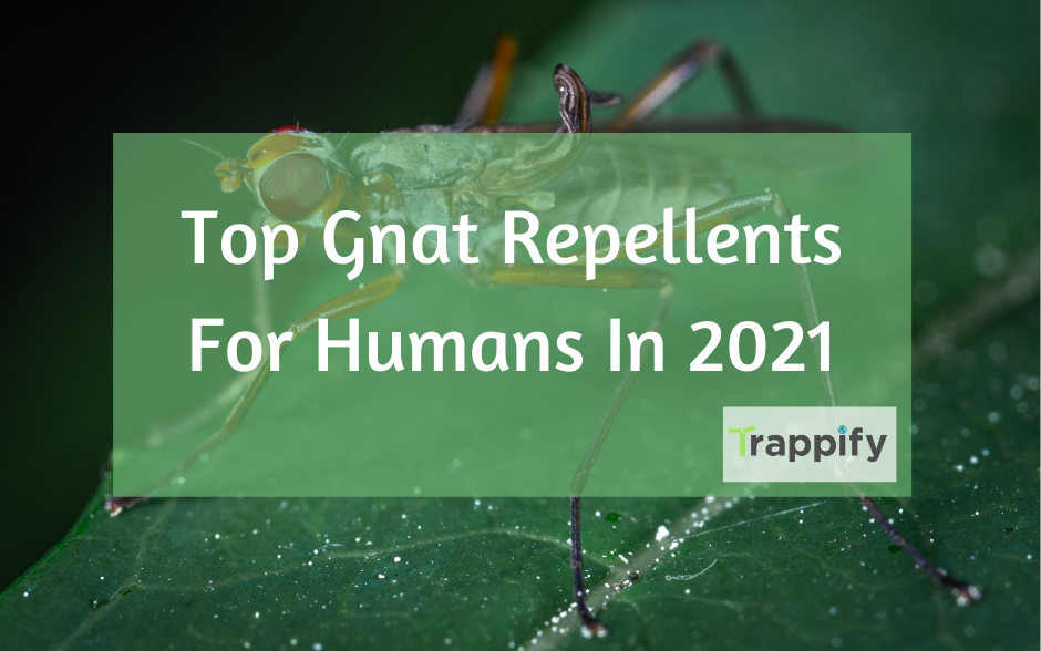 Best Gnat Repellent For Humans In 2021