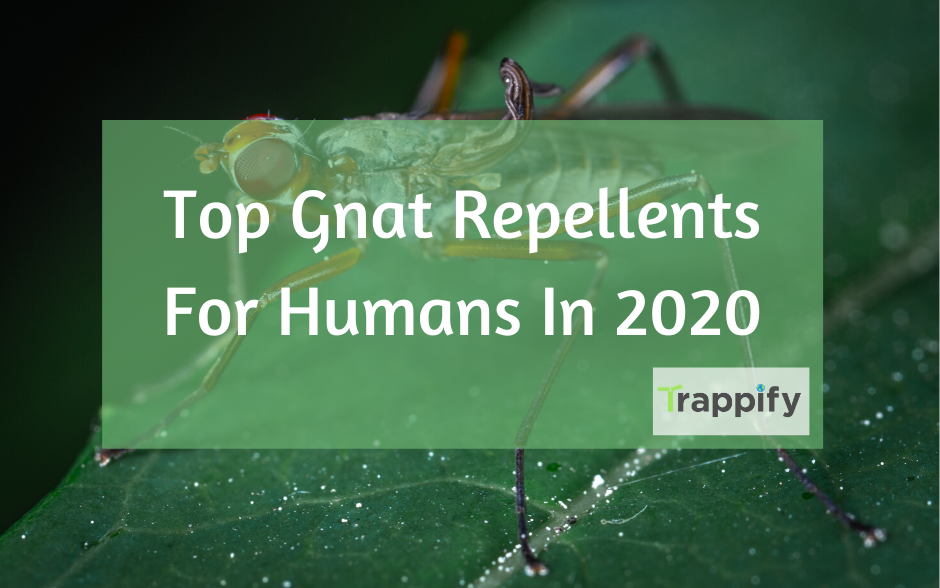 Best Gnat Repellent For Humans In 2020