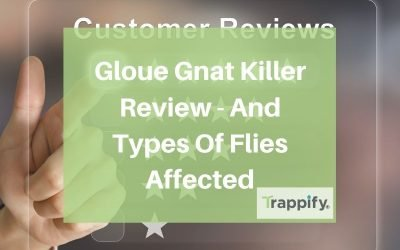 Gloue Gnat Killer Review – And Types Of Flies Affected