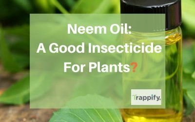 Neem Oil For Plants: A Good Insecticide For Plants?