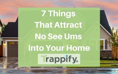 7 Things That Attract No See Ums Into Your Home