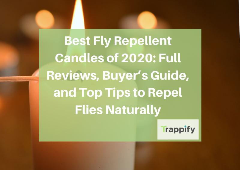 Best Fly Repellent Candles of 2020: Full Reviews, Buyer's Guide, and Top Tips to Repel Flies Naturally