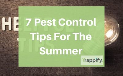 7 Pest Control Tips For The Summer – 2020 edition