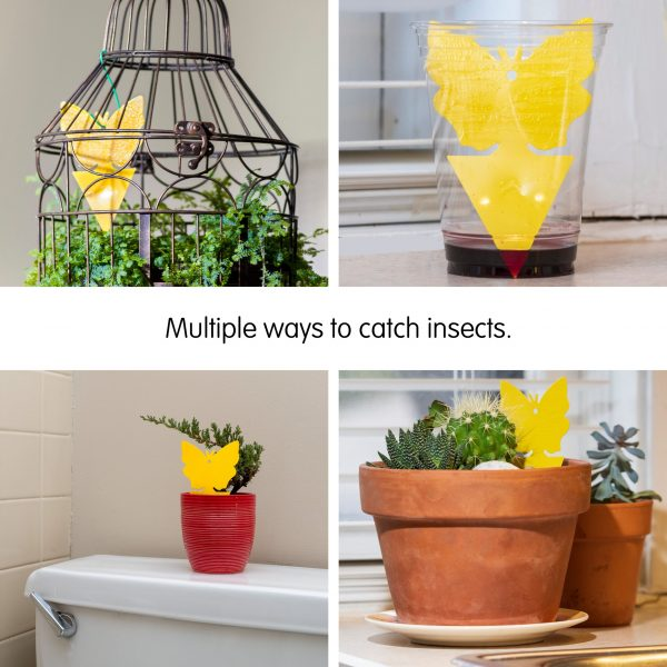 yellow-dual-sided-sticky-fruit-fly-and-gnat-traps