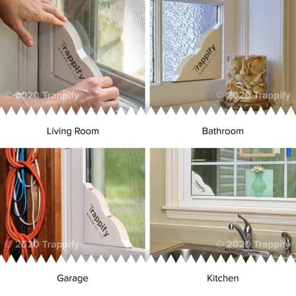 window fly traps