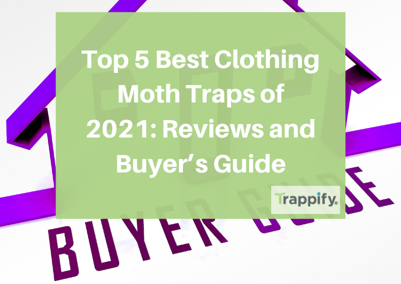 best-clothing-moth-traps