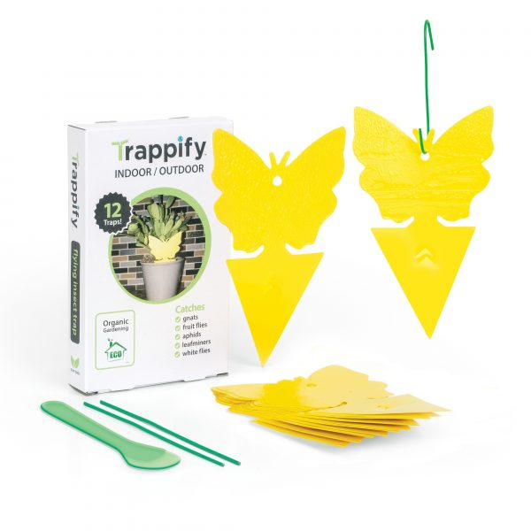 Yellow dual-sided sticky fruit fly and gnat traps