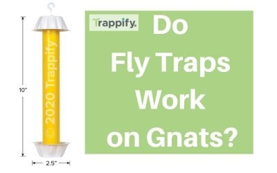 Do Fly Traps Work on Gnat: The Best Way to Get Rid of Gnats