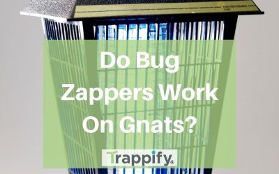 Do Bug Zappers Work on Gnats? 5 Alternatives to Try