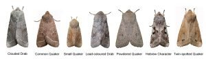 moth-types