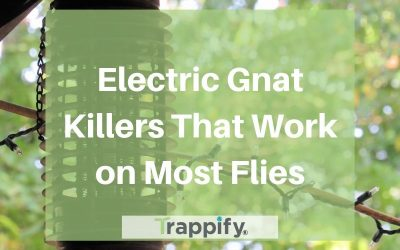 Electric Gnat Killers That Work on Most Flies