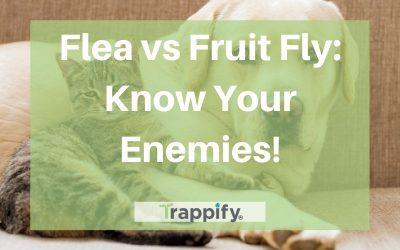 Flea VS Fruit Fly: Know Your Enemies!