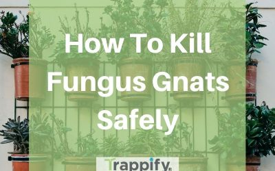 How to Kill Fungus Gnats Safely and Effectively