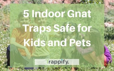 5 Indoor Gnat Traps Safe for Kids and Pets