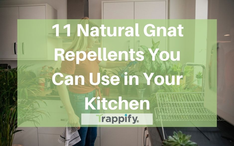 11 Natural Gnat Repellents You Can Use in Your Kitchen