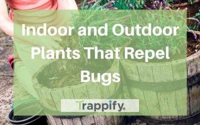 Indoor and Outdoor Plants That Repel Bugs