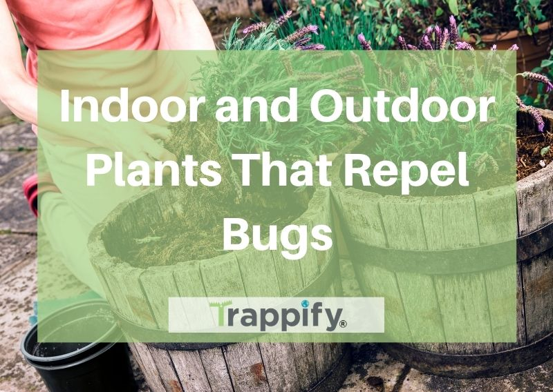 plants-that-repel-bugs