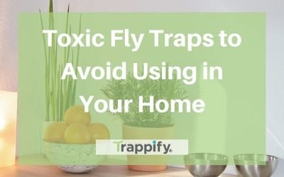 Toxic Fly Traps to Avoid Using In Your Home