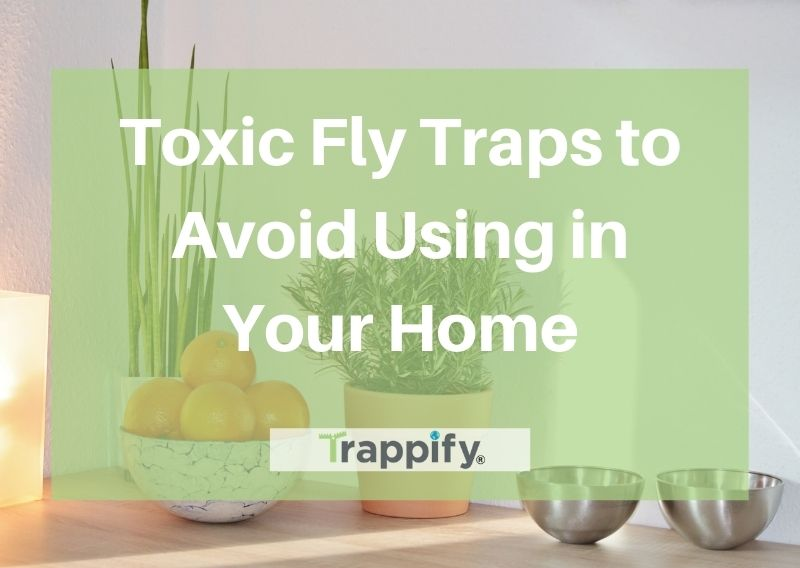 toxic-fly-traps