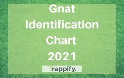 Our Gnat Identification Chart for 2021