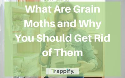 What Are Grain Moths and Why You Should Get Rid of Them
