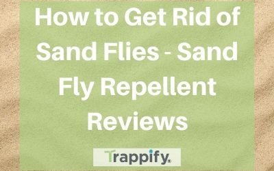 How to Get Rid of Sand Flies – Sand Fly Repellent Reviews