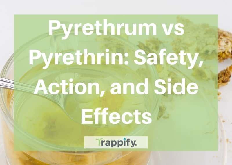 pyrethrum vs pyrethrin
