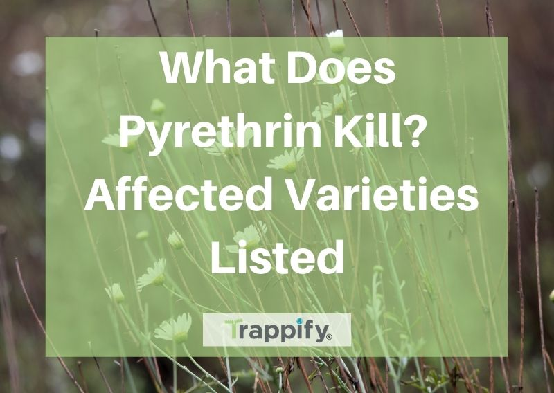 what-does-pyrethrin-kill