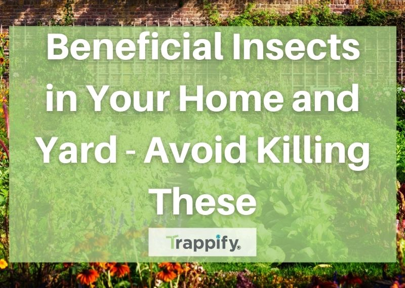 Beneficial Insects in Your Home and Yard – Avoid Killing These