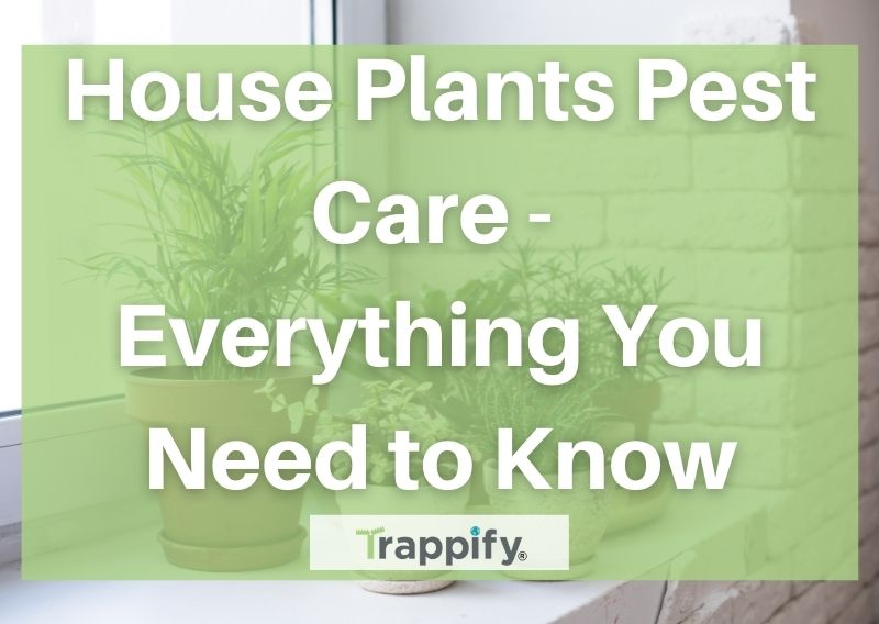 House Plants Pest Care – Everything You Need to Know