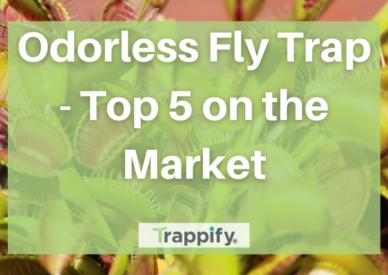 Odorless Fly Trap – Top 5 on the Market