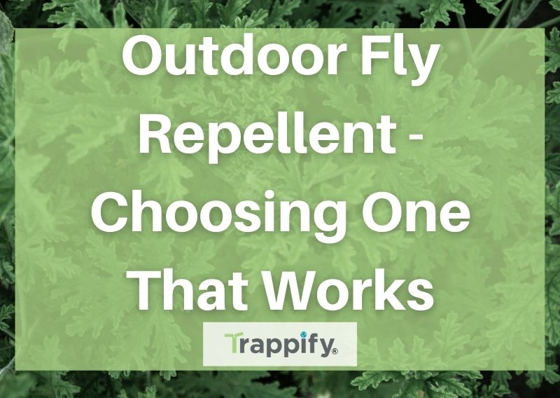Outdoor Fly Repellent – Choosing One That Works