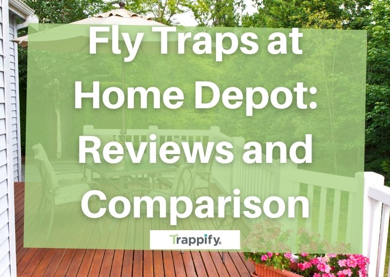 Fly Traps at Home Depot: Reviews and Comparison