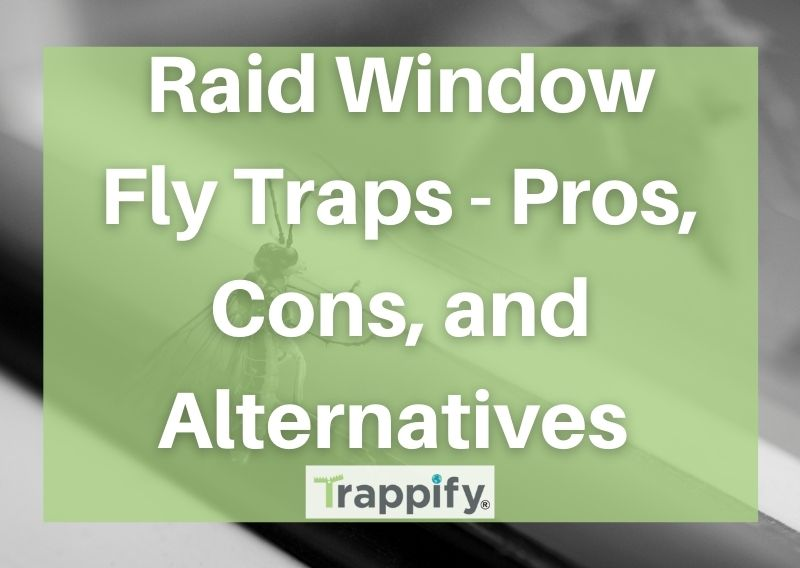 Raid Window Fly Traps – Pros, Cons, and Alternatives