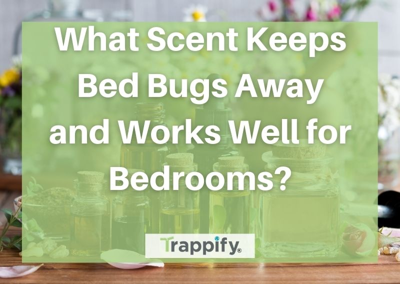 What Scent Keeps Bed Bugs Away and Works Well for Bedrooms?