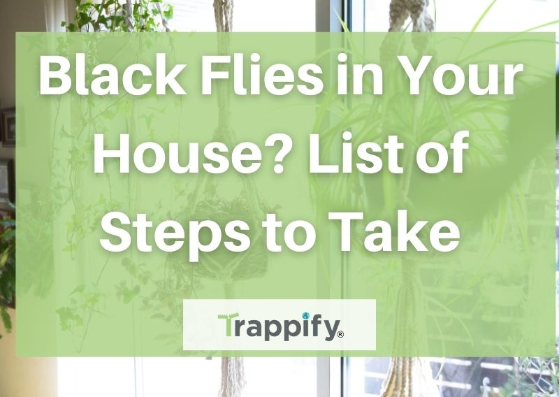 black-flies-in-house