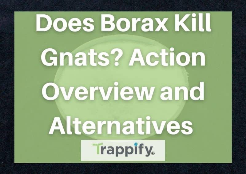 Does Borax Kill Gnats? Action Overview and Alternatives