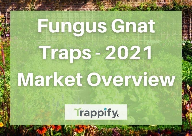 Fungus Gnat Traps – 2021 Market Overview